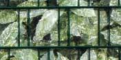 PVC Sichtschutz Aukube