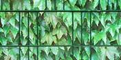 PVC Sichtschutz grünes Weinlaub