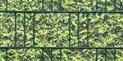 PVC Motiv Sichtschutz Thuja / Lebensbaum
