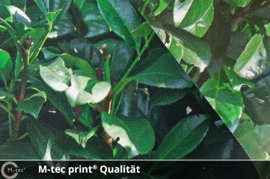 M-tec print Qualität Kirschlorbeer